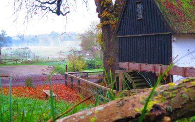 Tadre Mølle kåret til  Danmarks næstsmukkeste vandmølle